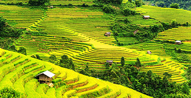 Rice Terraces, Sapa